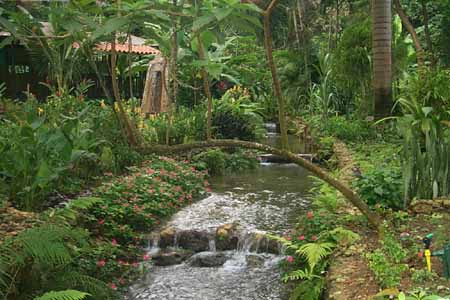 Pictures from Jamacia! / pretty garden jamacia copy